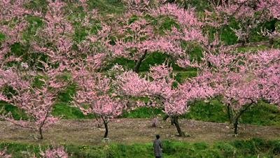 antonia-pozzi-primavera-poesia-sogni-la santa furiosa