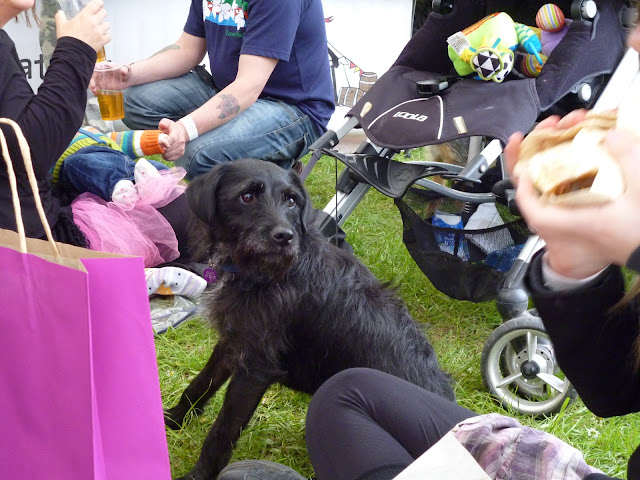 Cute Festival dog, with awesome eyebrows and fine bacon concentration