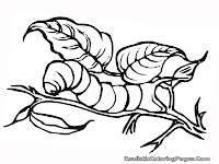 insect coloring pages caterpillar