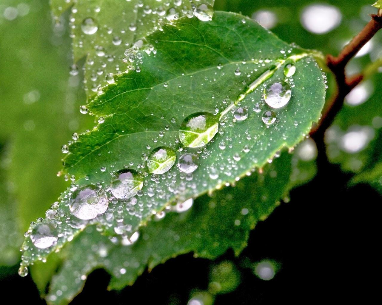 green rain rain nature wallpaper 16 picture gallery