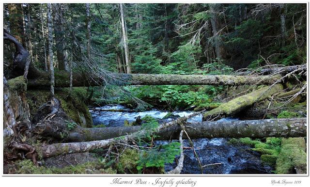 Marmot Pass: Joyfully splashing
