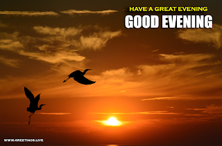 Good Evening wishes images sunset Flying birds.