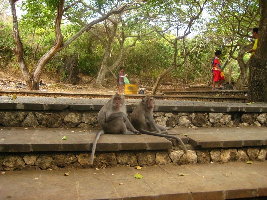 원숭이 두마리