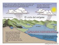 Resultado de imagen para ciclo biogeoquimico oxigeno