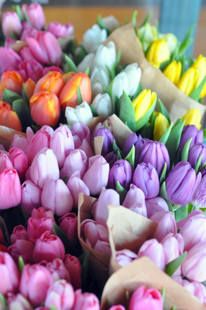 a rainbow of pretty tulip bunches