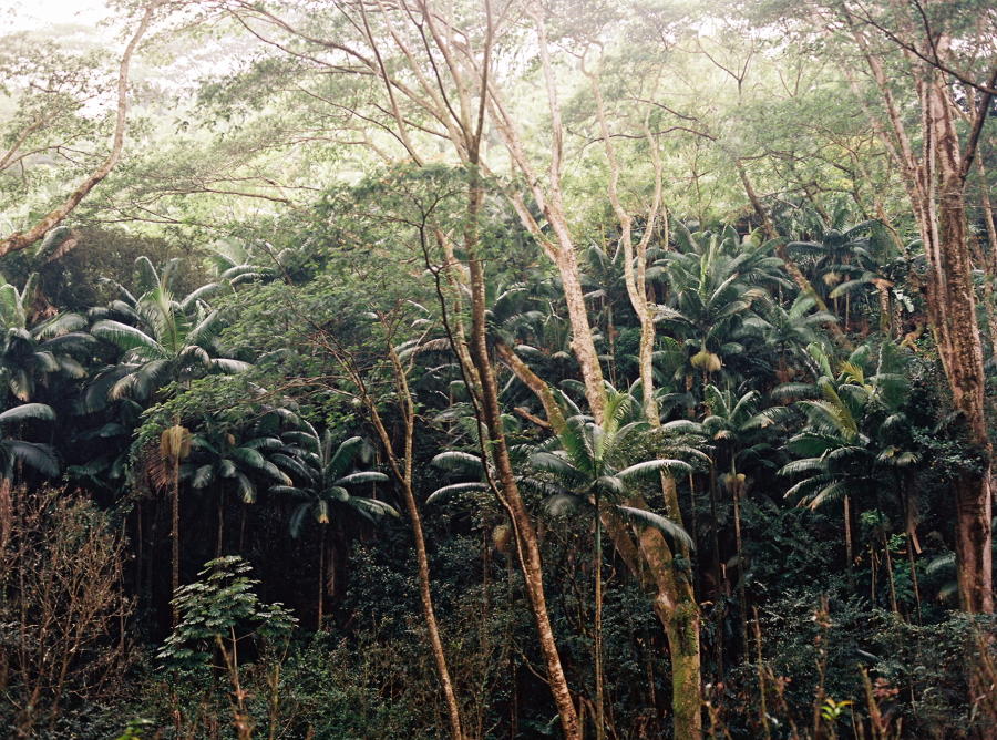 Rainforest On The Big Island: Food And Lifestyle Photography By @christineshoots : The