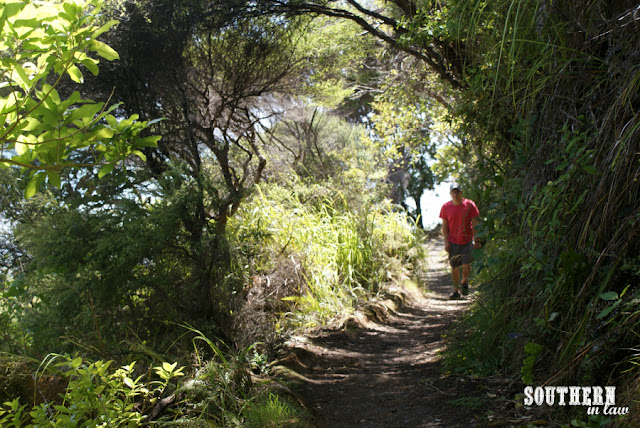 The Kauri Bush Walk Coromandel Area New Zealand North Island