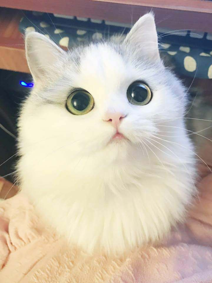 Funny cats - part 298, best funny cat, cat image, cute cat