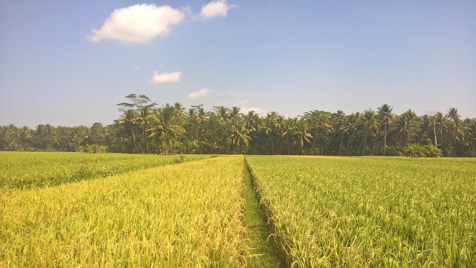 Pertanian Kebumen