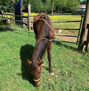 Abandoned horse found in Haughton as Bossier Sheriff's Office searches for owner