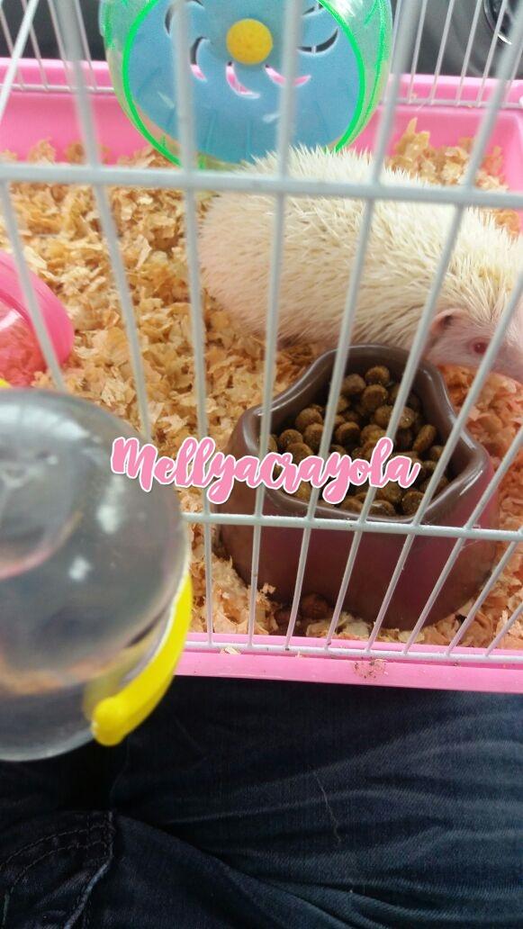 From Rabbit to Albino Hedgehog