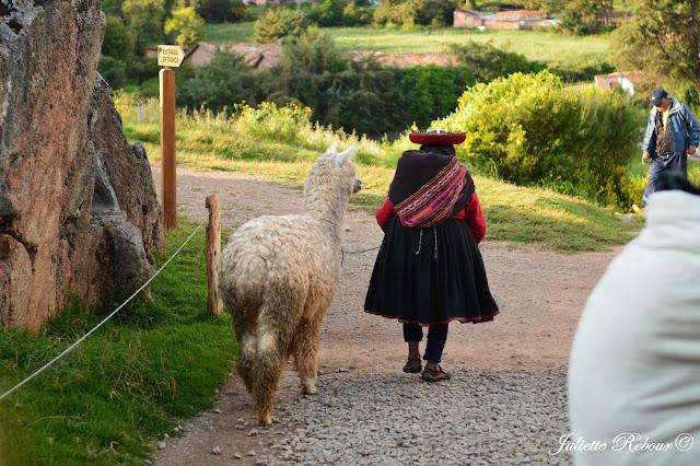 Alpaga sur le site de Sacsayhuaman au Pérou