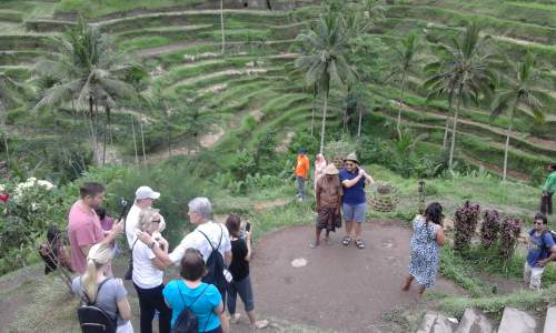 Tourist Take Photos at rice Terrace Tegallalang