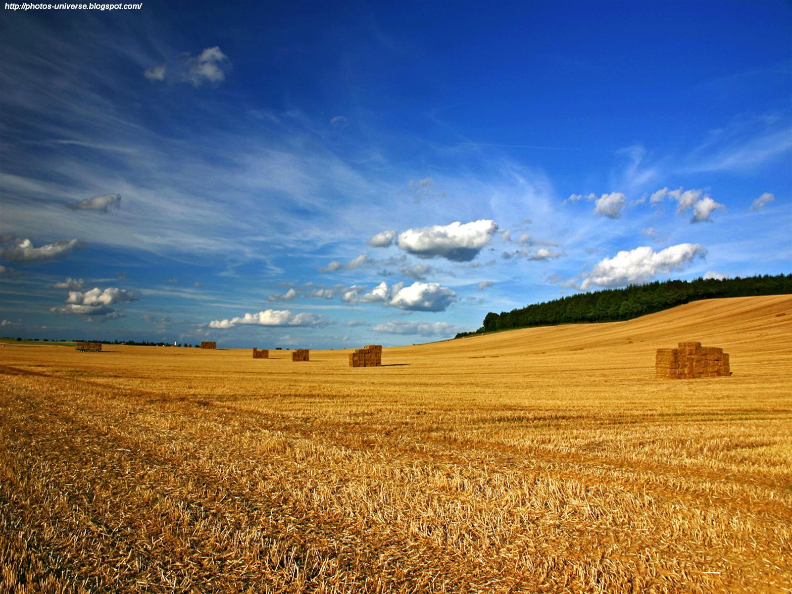 Club 4 Buzz: Crops & Field Wallpapers