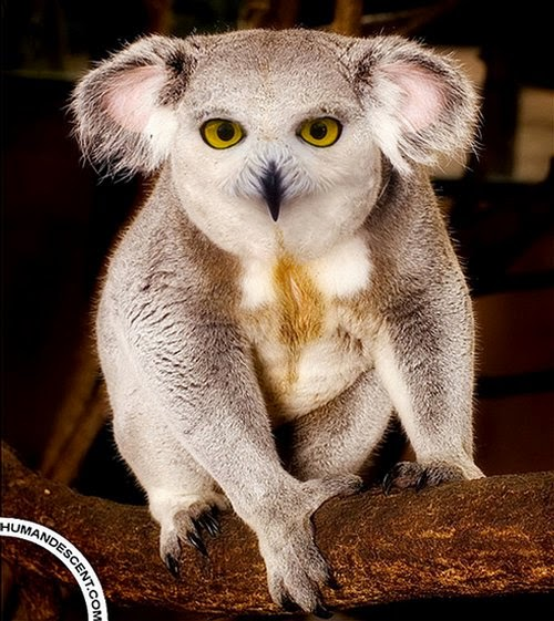 24-Koalowl-Martin-Humandescent-Surreal-Animal-Mashup-www-designstack-co