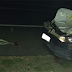 Animal solto na BR 324 provoca acidente em Capim Grosso