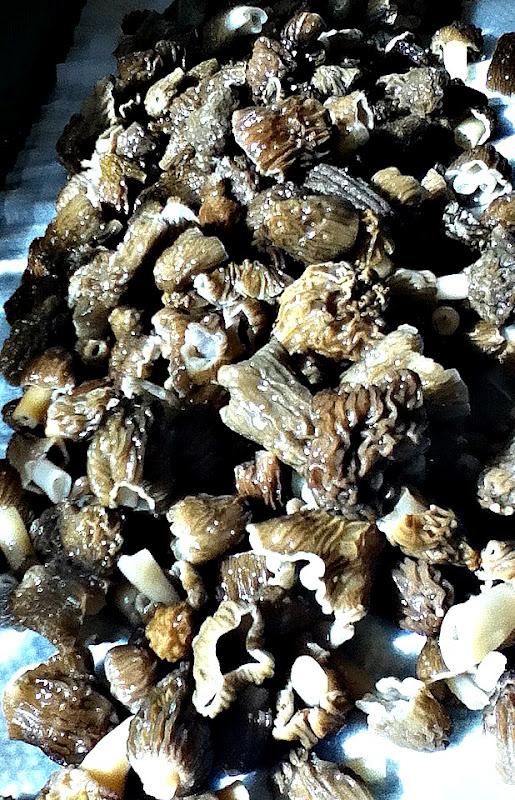 sweetsugarbean: Into the Wild: Wild Mushroom & Asiago Risotto Cakes