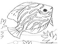 Discus Fish Animal Kids Coloring Pages Printable