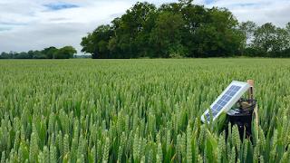 Agriculture IoT (AIoT) повысит производительность сельского хозяйства в 1,7 раза