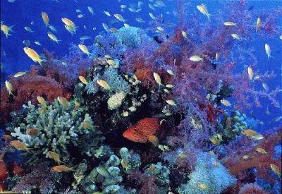 Foto de pequeños peces en el mar
