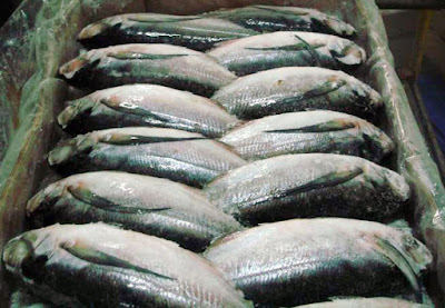 How to Cook Frozen Sardine Fish in Oil and Tomato Sauce