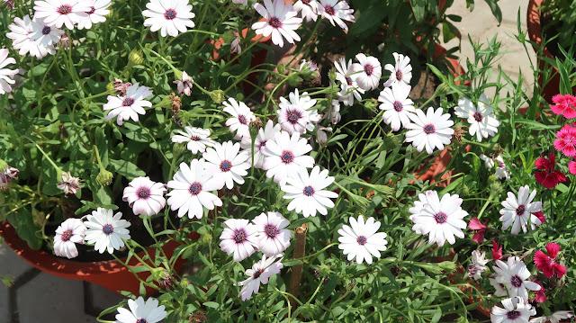flower-wallpaper-hd-download-free