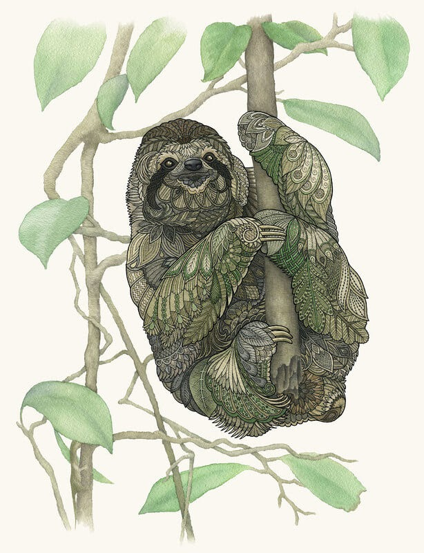 08-Sloth-Z-H-Field-Distinctive-Animal-Drawings-and-Paintings-www-designstack-co
