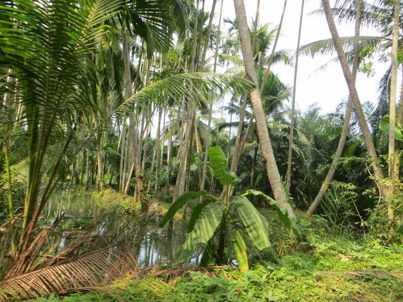 Подтопленые пальмы