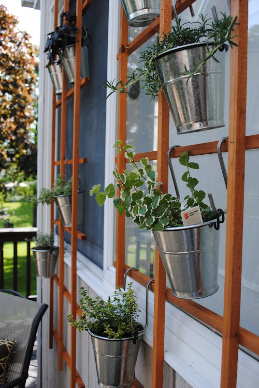 Plants hung on the trellis