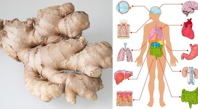 EAT GINGER EVERY DAY FOR 1 MONTH AND THIS WILL HAPPEN TO YOUR BODY!