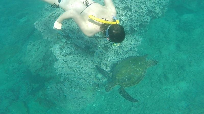 Danielle diving with the sea turtles
