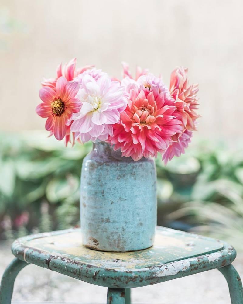 Flores de Dalia en jarrón rústico de cerámica