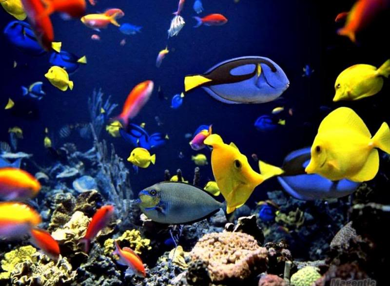 Live Fish Wallpapers Hd 3d Water Theme 11 Seedroid