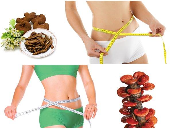 công dụng giảm cân của nấm linh chi