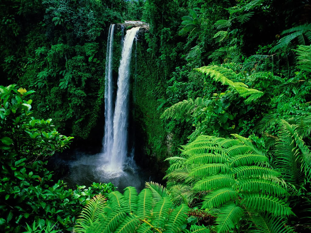 Genesis Nature Blog Rainforests