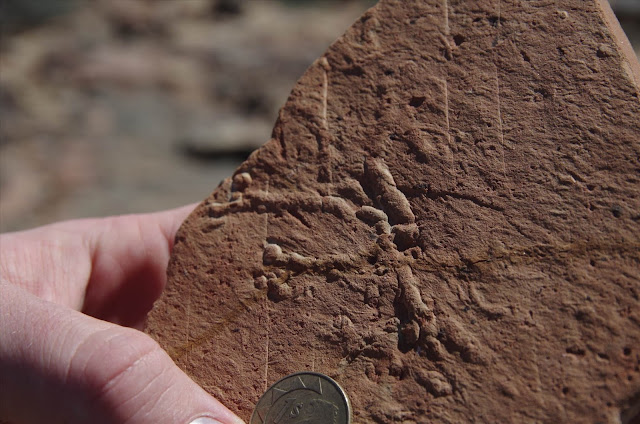 Uranium-lead dating shows that the 'Cambrian explosion' is younger than previously thought