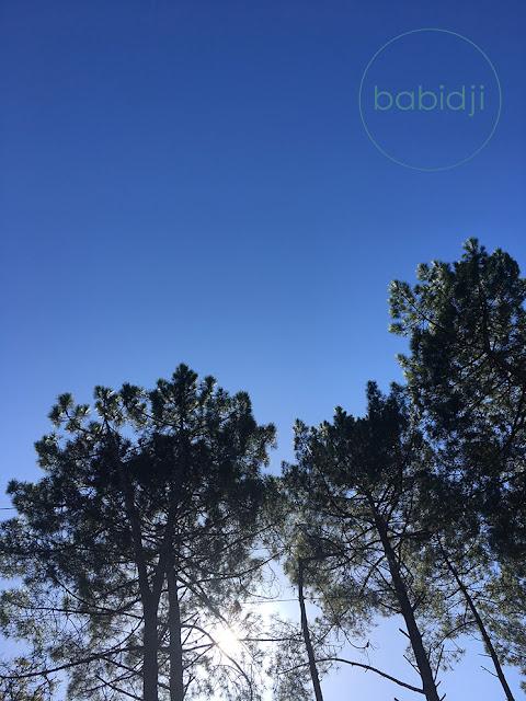 haut des pins