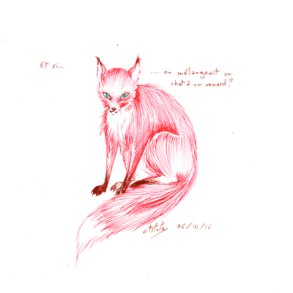 Un mélange étrange de chat et de renard