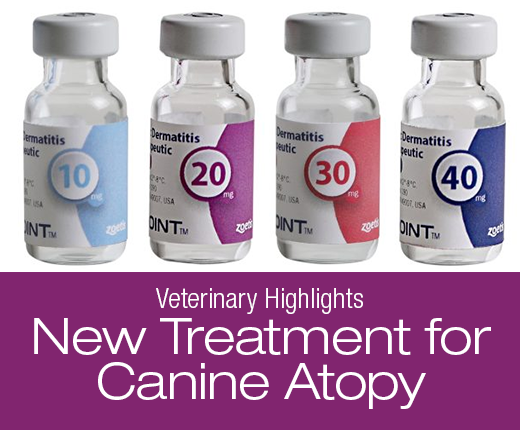Veterinary Highlights: Cytopoint, New Treatment for Canine Atopy