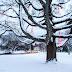 Deering Oaks Holiday Tree