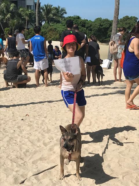 Adopt don't shop Singapore Pets