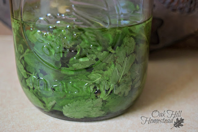 Lemon balm steeping in hot water to make lemonade syrup.