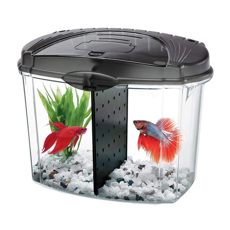 Image The Basics of Betta Fish Tank Amazon
