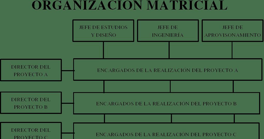 Administracion Organigrama Matricial De Toyota