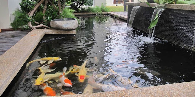 Kolam Ikan Minimalis - Cara budidaya Ikan