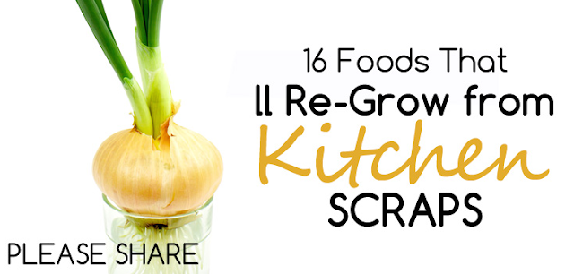 Fort Lauderdale Personal Chef - 16 Foods That'll Re-Grow from Kitchen Scraps