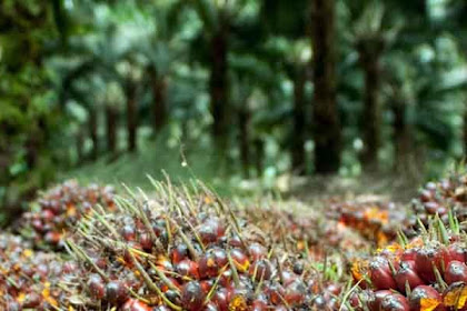 Lowongan Kerja Riau : Perusahaan Industri Kelapa Sawit Mustika Agung Group April 2017