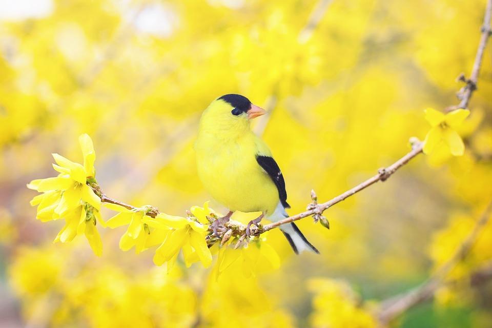 Fall Bird Feeder Wallpaper Wild Birds Unlimited