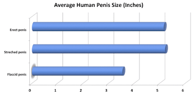 diagram showing what is the average adult penis size