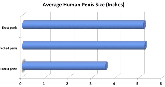 Average Size Of Pornstar Penis